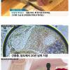 한국인 50만명이상 감염