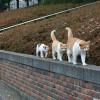 줄지어가는 고양이들.jpg