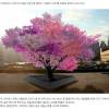 40가지 과일이 동시에 열리는 마법의 나무