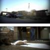 노인들의 새끼 고양이 돌보기 프로젝트.jpg