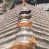 지붕냥.jpg