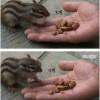 병원 옥상에서 사는 다람쥐