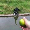 요즘 유행하는 침팬치 속이는 동영상!