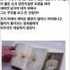 남극 펭귄의 무서운 비밀 ㄷㄷㄷ
